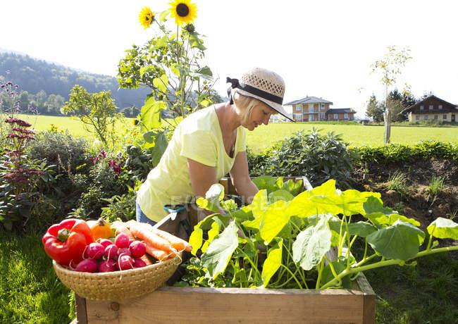 Woman pruning plants in her garden — Stock Photo