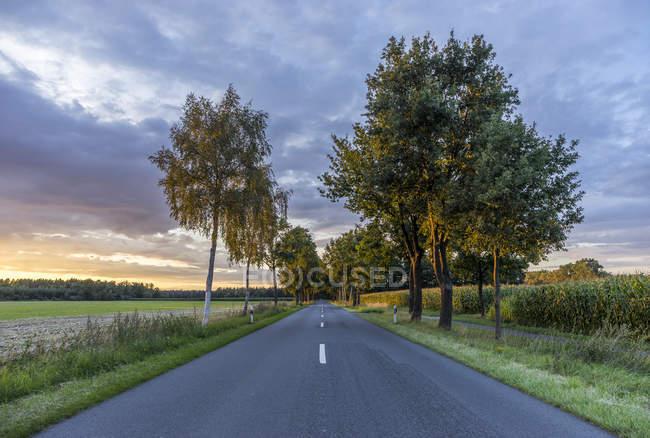 Германия, Гифхорн, дорога, выложенная деревьями вечером — стоковое фото