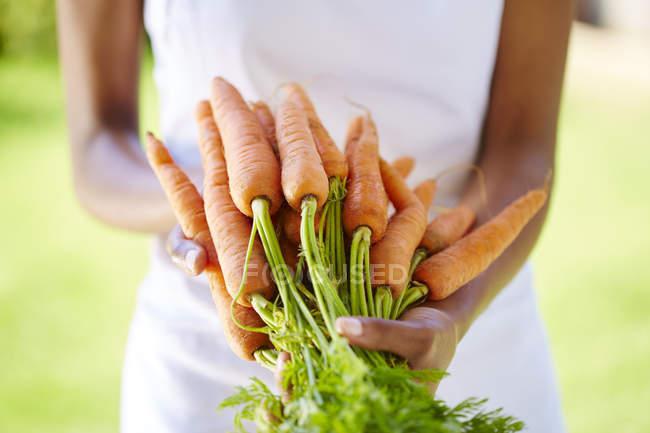 Mujer manos sosteniendo ramo de zanahorias frescas cogidas - foto de stock
