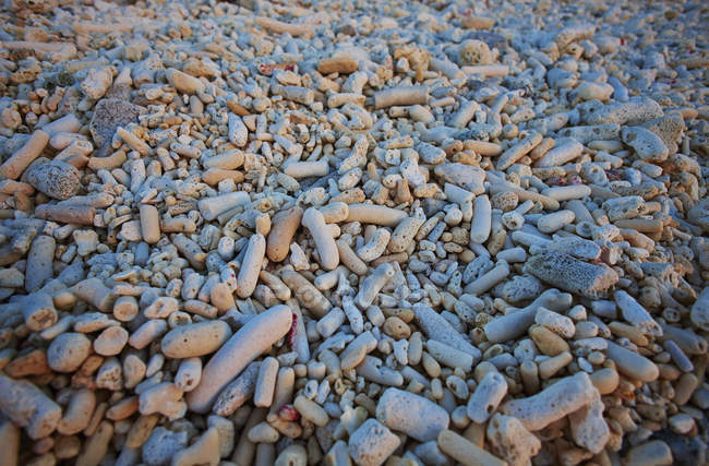 Caribbean, Netherlands Antilles, Bonaire, stones on Pink Beach — Stock Photo