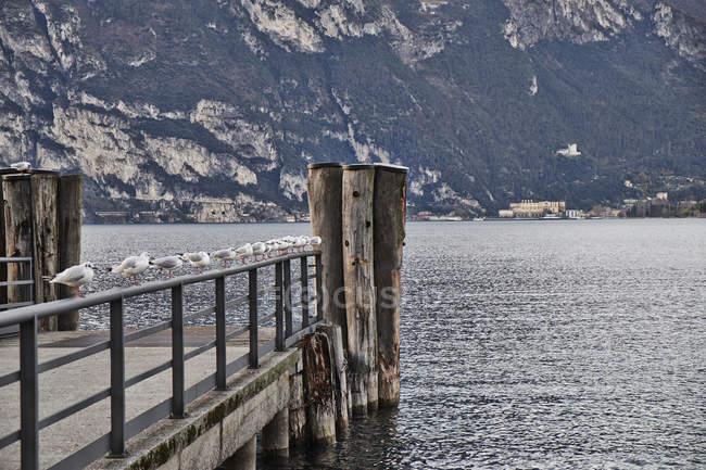 Seagulls perching on pier, Lake Garda, Torbole, Italy — Stock Photo