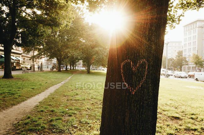 Германия, Берлин, сердце на стволе дерева — стоковое фото