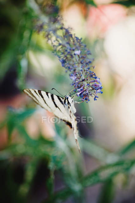 Andorinha, pendurado na flor — Fotografia de Stock
