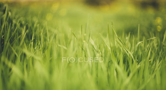 Green Grass on blurred background — Stock Photo