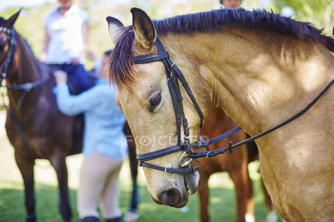 Riding horse with people in background — Stock Photo