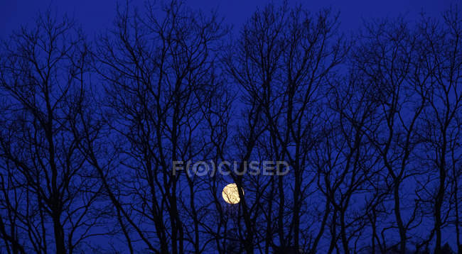 Full moon behind branches of a bare tree — Stock Photo