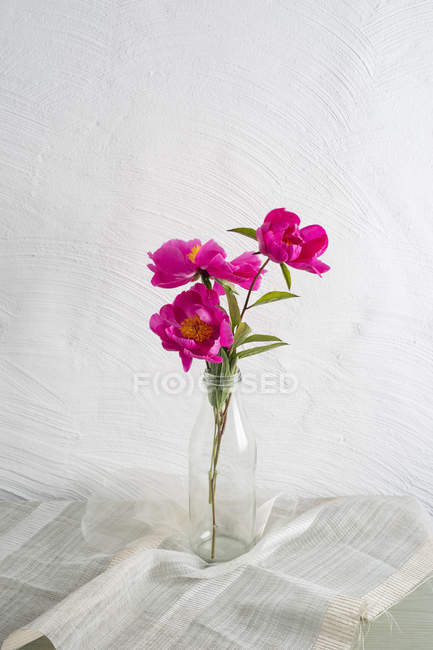 Pink peonies in a glass bottle on white background — Stock Photo