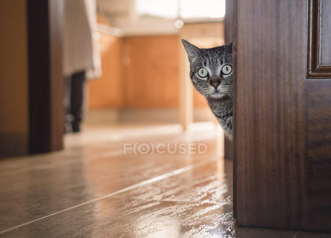 Tabby cat hiding behind a door at home — Stock Photo