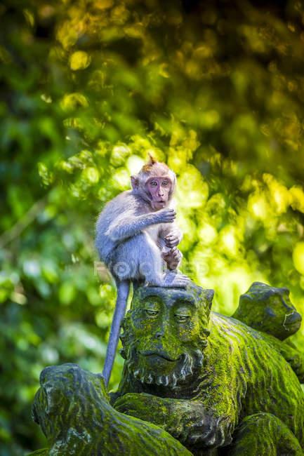 Monkey sitting on monkey sculpture at Sacred Monkey Forest, Indonesia, Bali, Ubud — Stock Photo