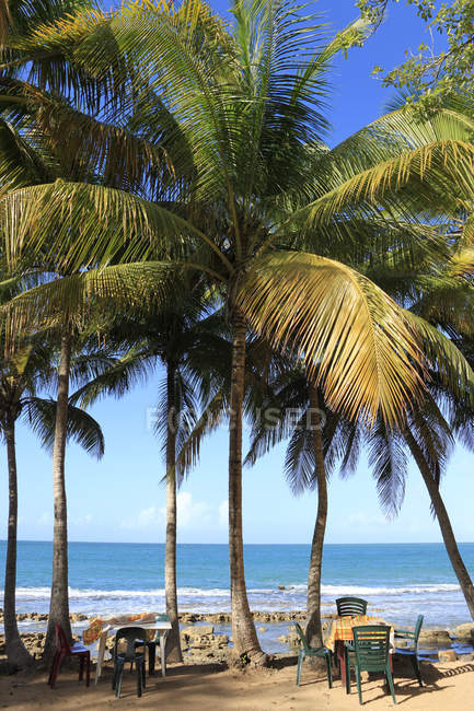 Caribbean, Guadeloupe, Basse-Terre, Coconut palms at beach Plage de Clugny — Stock Photo