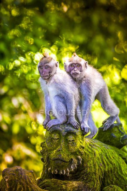 Monkeys sitting on monkey sculpture at Sacred Monkey Forest, Indonesia, Bali, Ubud — Stock Photo