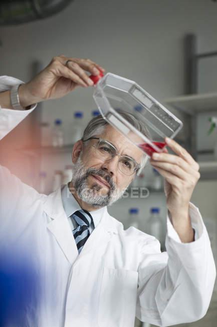 Scientifique examinant le liquide en laboratoire — Photo de stock