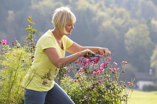 Женщина обрезает растения в своем саду — стоковое фото