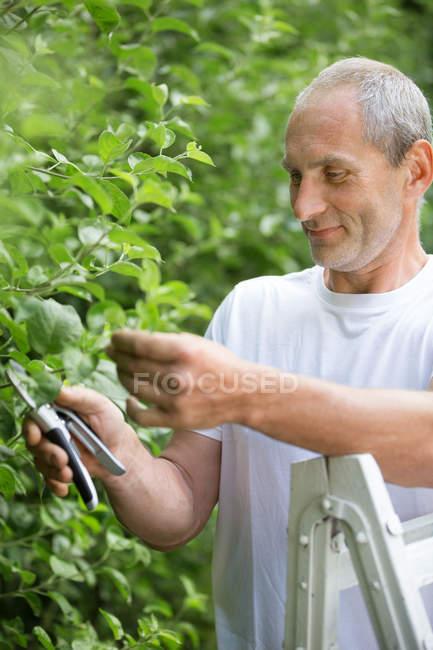Человек обрезает растения с садовым клиппером в саду — стоковое фото