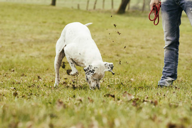 Людина з собакою покопавшись в лузі — стокове фото