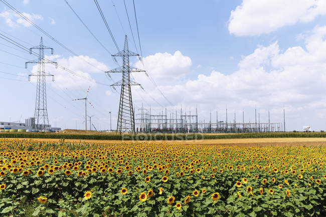 View sunflowers field and wind farm Moenchhof-Halbturn at Burgenland, Austria — Stock Photo