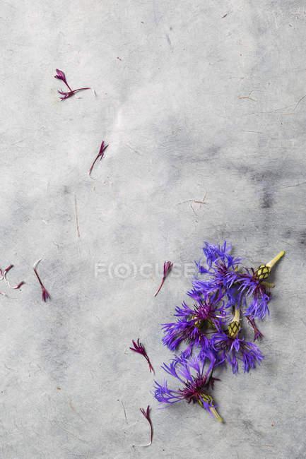 Цвітіння зонтичний на сірий мармур поверхні — стокове фото