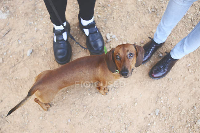 Dachshund com proprietários ao ar livre — Fotografia de Stock