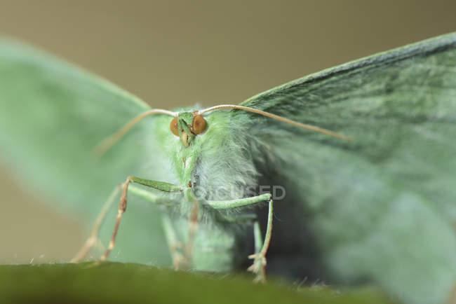Grande primo piano smeraldo — Foto stock
