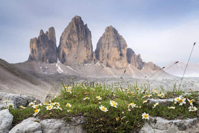 Italie, Dolomites, Tre Cime di Lavaredo, fleurs blanches avec monture sur fond — Photo de stock