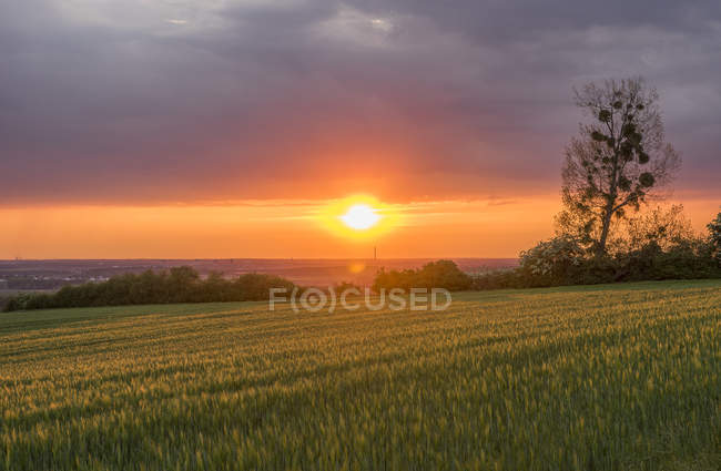 Germany, Lower Saxony, Erkerode, Braunschweig, sunset in summer countryside — Stock Photo