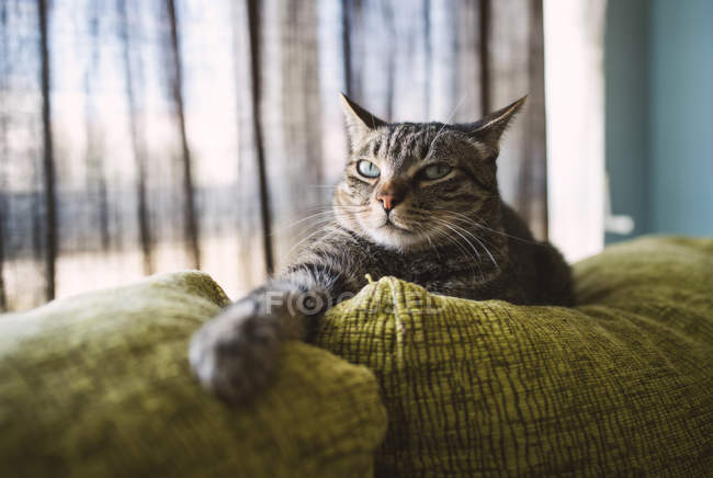 Portrait of Tabby cat relaxing on couch at home interior — Stock Photo