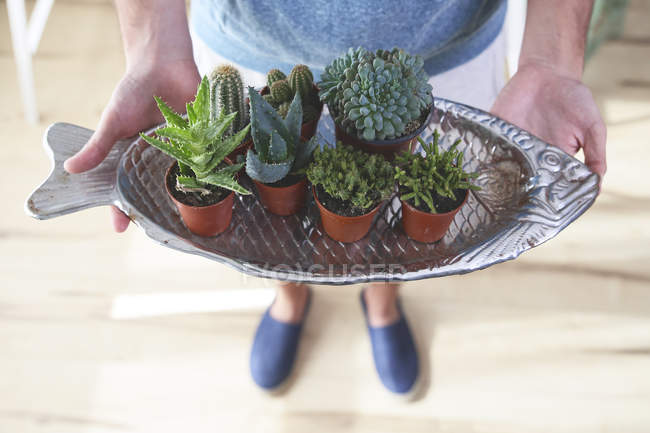 Young man with fish-shaped cacti tray — Stock Photo