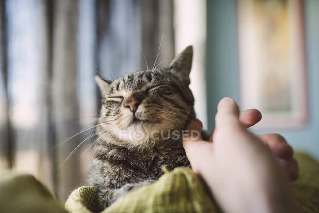Close-up de gato tigrado acariciando de mão humana — Fotografia de Stock