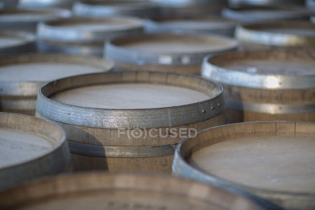 Close-up de barris de vinho em fileiras em cooperação — Fotografia de Stock