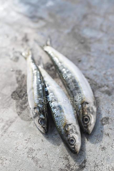 Сырые сардины рыбы на деревянные поверхности — стоковое фото
