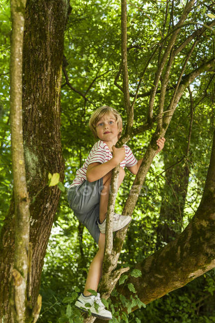 Little boy climbing on a tree in the forest — Stock Photo