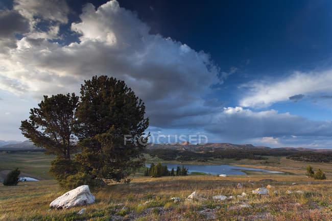 USA, Montana, Paesaggio e lago con alberi sul campo — Foto stock