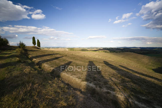 Italy, Tuscany, Siena Province, Crete Senesi, Cypress trees at sunset — Stock Photo