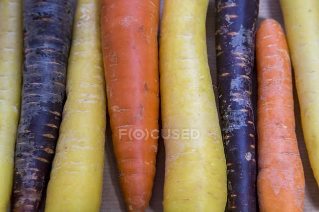 Ряд различных органических морковок, крупным планом — стоковое фото