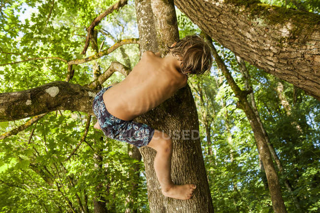 Back view of little boy climbing on a tree in the forest — Stock Photo