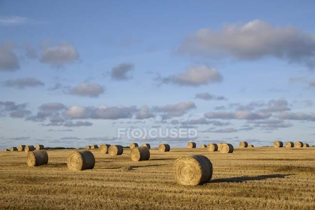 Великобритания, Шотландия, соломенные тюки на поле — стоковое фото