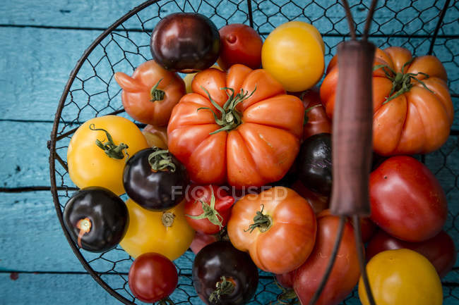 Различные семейные помидоры в корзине из проволоки — стоковое фото