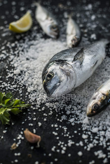 Raw sea bream fish on salt on black table — Stock Photo