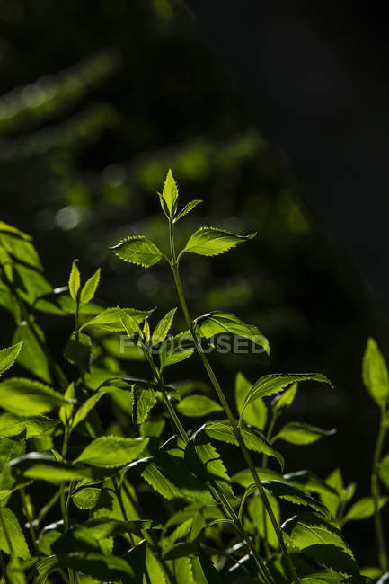 Growing plant on blurred background — Stock Photo