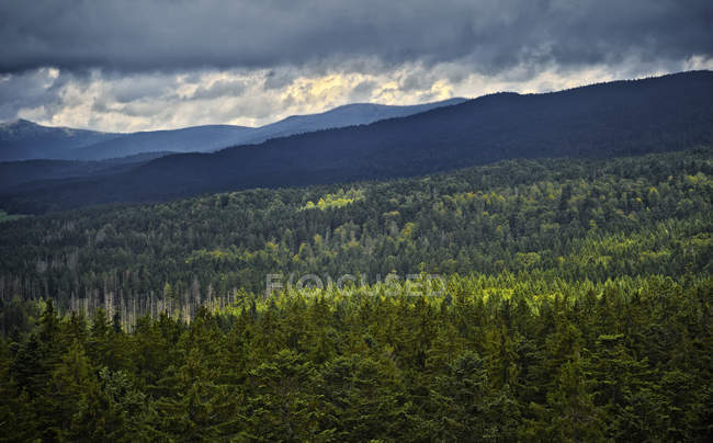 Alemania, Bosque de Baviera, vista desde el canopy walk en Neuschoenau - foto de stock