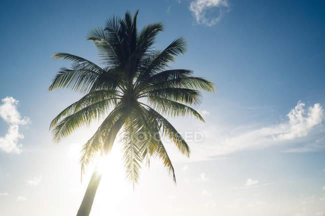 Вид на пальму перед солнечным небом — стоковое фото