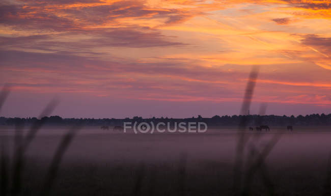 Chevaux en pâturage au lever du soleil près d'Ijsselmeer, Pays-Bas — Photo de stock