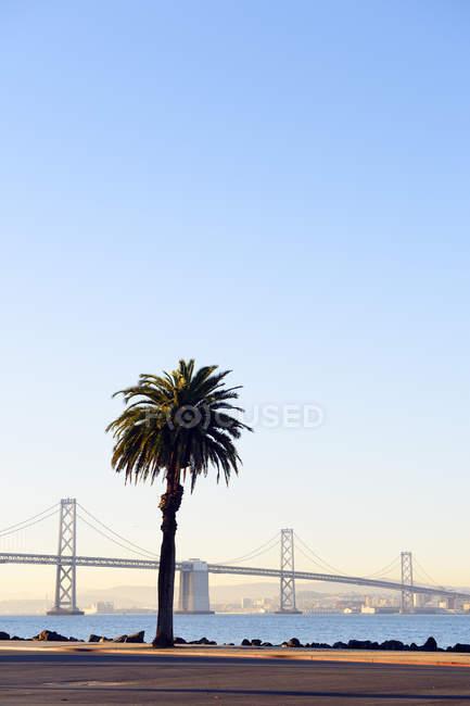 США, Каліфорнія, Сан-Франциско, Окленд міст через затоку і пальмових дерев на Острів скарбів у ранковому сонці — стокове фото