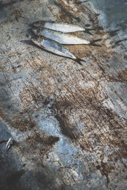 Сырые сардины рыбы на ветхие деревянные поверхности — стоковое фото
