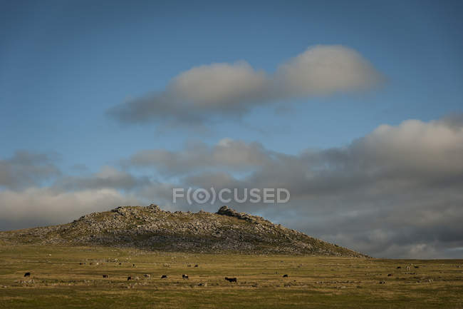 Regno Unito, Inghilterra, Cornovaglia, Bodmin Moor, grezzo Tor — Foto stock