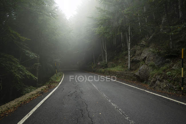 Italy, Tuscany, Monte Amiata, Forest and empty road in autumn — Stock Photo