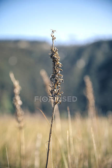Close p of spike on a field in sunny day — Stock Photo