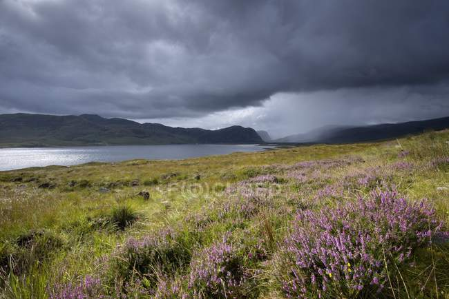 Royaume-Uni, Écosse, Highlands, Loch Eriboll, heath — Photo de stock