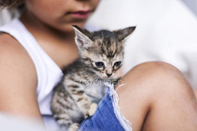 Portrait de chaton tabby assis sur la jambe du petit garçon — Photo de stock