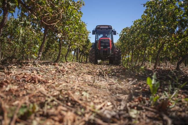 Tractor in vineyard, surface level view — Stock Photo